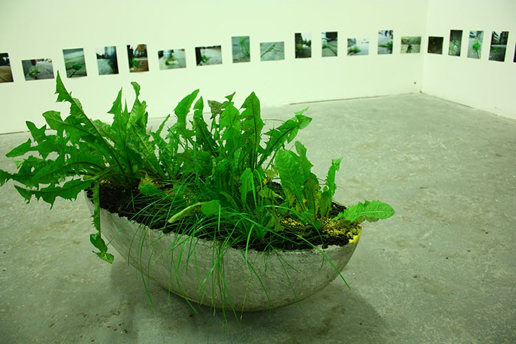 Meadhbh O'Connor, Road/Dandelion, installation