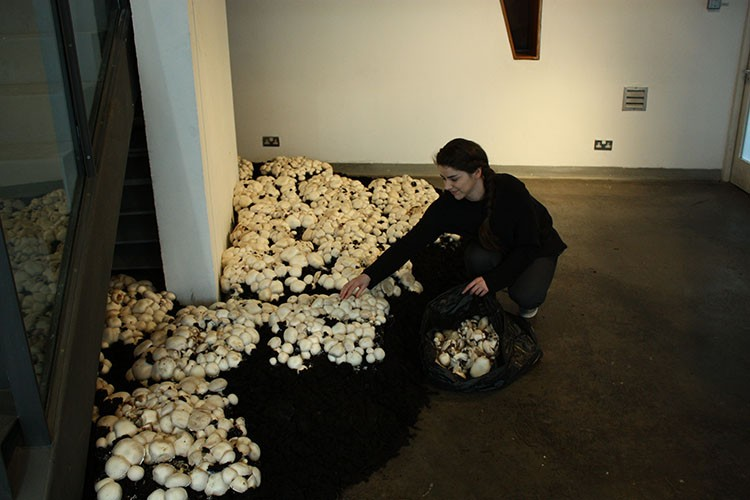 Meadhbh O'Connor, Biosphere, 2011