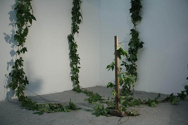 Meadhbh O'Connor, Noxious Species, installation art