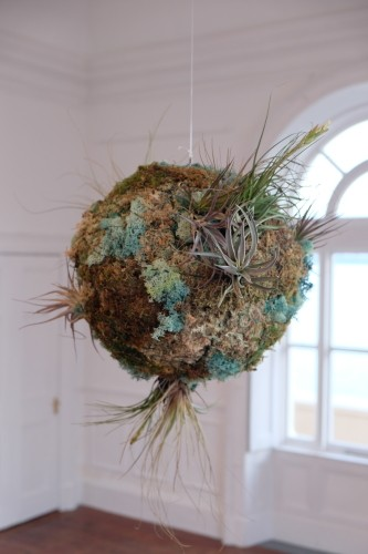 'Biosystem IV', installation by Méadhbh O'Connor. Commissioned for the exhibition Sustainable Futures, Cork 2018. Curated by Claire Ryan.