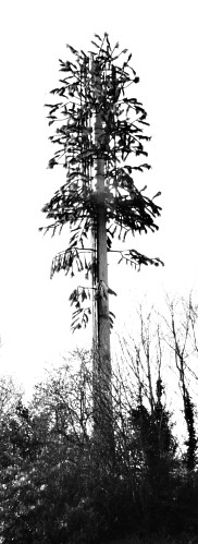 Méadhbh O'Connor. 'Evergreen (Radio Mast)'. 2013.
