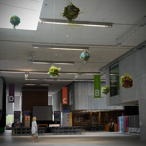 Biosystem V, 2018. Living orbs made using air plants, soil based plants, preserved and live mosses, wire. Ranging from 30 – 50 cm diameter.