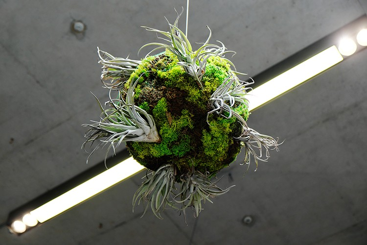 Closeup of biosphere. Living air plants, living and preserved mosses, wire. Approx. 50cm diameter